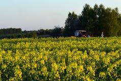 领域有开花的黄色 免版税库存图片
