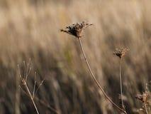领域植物 免版税图库摄影