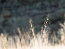 领域植物 免版税库存照片