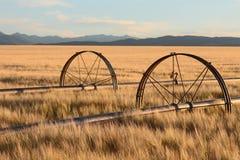 领域灌溉系统在蒙大拿 免版税库存图片