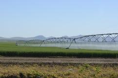 领域灌溉系统 免版税图库摄影