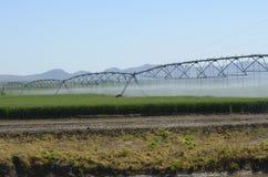 领域灌溉系统 免版税库存图片