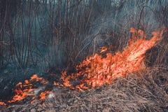 领域烧干草,是环境环境的危害,污染和空气,植物群的破坏 库存照片