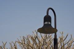 领域照明设备和羽毛 免版税图库摄影