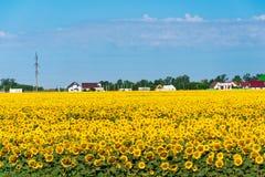 领域用在村庄前面的向日葵 免版税库存图片