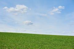 领域用绿色麦子和天空蔚蓝,春天 免版税库存图片