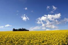 领域用被砍成的玉米和云彩 免版税图库摄影