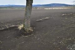 领域由风力侵蚀危及了 免版税库存照片