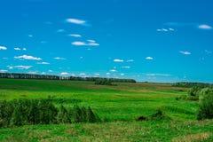 领域的一个理想的minimalistic风景与绿草、森林和蓝天的与云彩 免版税库存照片
