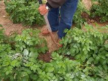 领域的农夫 免版税库存照片