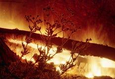 领域的剪影在火背景开花  免版税图库摄影