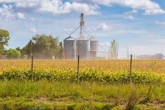 领域的大豆种植园与defocused筒仓在背景中 库存图片