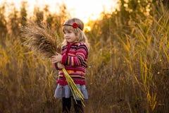 领域的小女孩与日落 库存图片