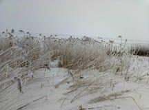 领域的植物由霜报道了季节的具体 免版税图库摄影