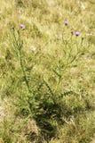 领域的植物 库存图片