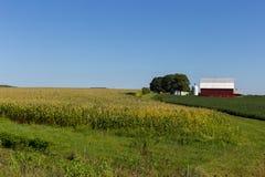 领域的红色谷仓 库存图片