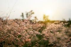 领域的草甸在期间 图库摄影