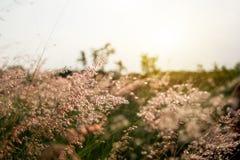 领域的草甸在期间 库存图片