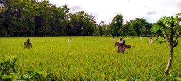 领域的稻草人 库存照片