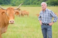 领域的画象农夫与牛 库存图片