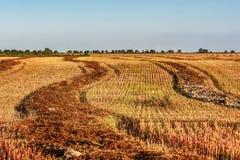 领域秸杆荞麦收获农业 库存图片