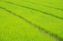 领域米 免版税库存照片