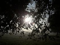 领域美好的场面早晨 库存照片