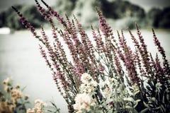 领域花束,野花的春天花束 库存图片