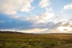 领域风景天蓝色和黄色 图库摄影
