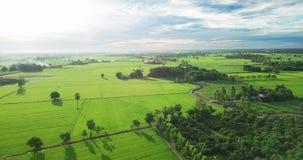 领域鸟瞰图与农业的各种各样的类型的在农村泰国 股票录像