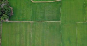 领域鸟瞰图与农业的各种各样的类型的在农村泰国 影视素材