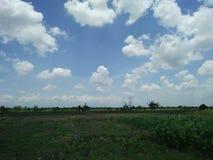 领域,宽广,被舒展,绿色,玉米,食物,浩瀚,风景,新鲜,凉快,自然,农夫,土地,植物 库存图片