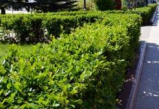 领域,植物,绿色,自然,庭院,农业,农场,叶子,菜,草,风景,夏天,土豆,树,食物,茶,organi 免版税库存照片