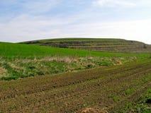 领域,草甸,牧场地。 图库摄影