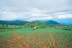 领域,菜,圆白菜,农场,花椰菜 免版税库存照片