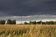 领域,麦子的耳朵 免版税库存图片