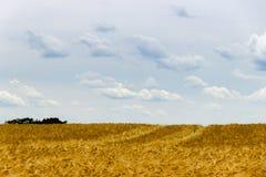 领域a的美丽的景色在一个晴天 麦子-接近的o 免版税图库摄影