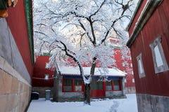 积雪的风景 库存图片