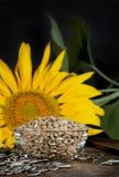 2颗种子向日葵 库存照片