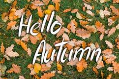 题字你好秋天,在橡木叶子和绿草背景  免版税库存图片