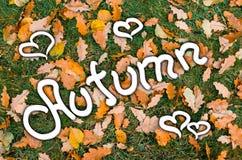 题字秋天,在橡木叶子和绿草背景  库存照片