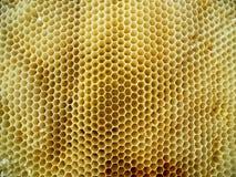 题材蜂房 库存图片