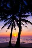 颜色使充满活力红色的日落环境美化 海滩和日落天空 在日落的棕榈树剪影 库存照片