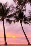 颜色使充满活力红色的日落环境美化 免版税库存照片