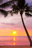 颜色使充满活力红色的日落环境美化 免版税图库摄影