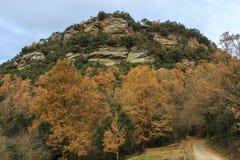 颜色变化在秋天结束时 免版税库存照片