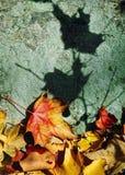 颜色叶子影子 图库摄影