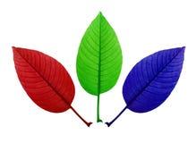 颜色叶子 免版税库存照片