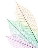 颜色叶子 库存图片