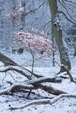 颜色在冬天 免版税库存照片